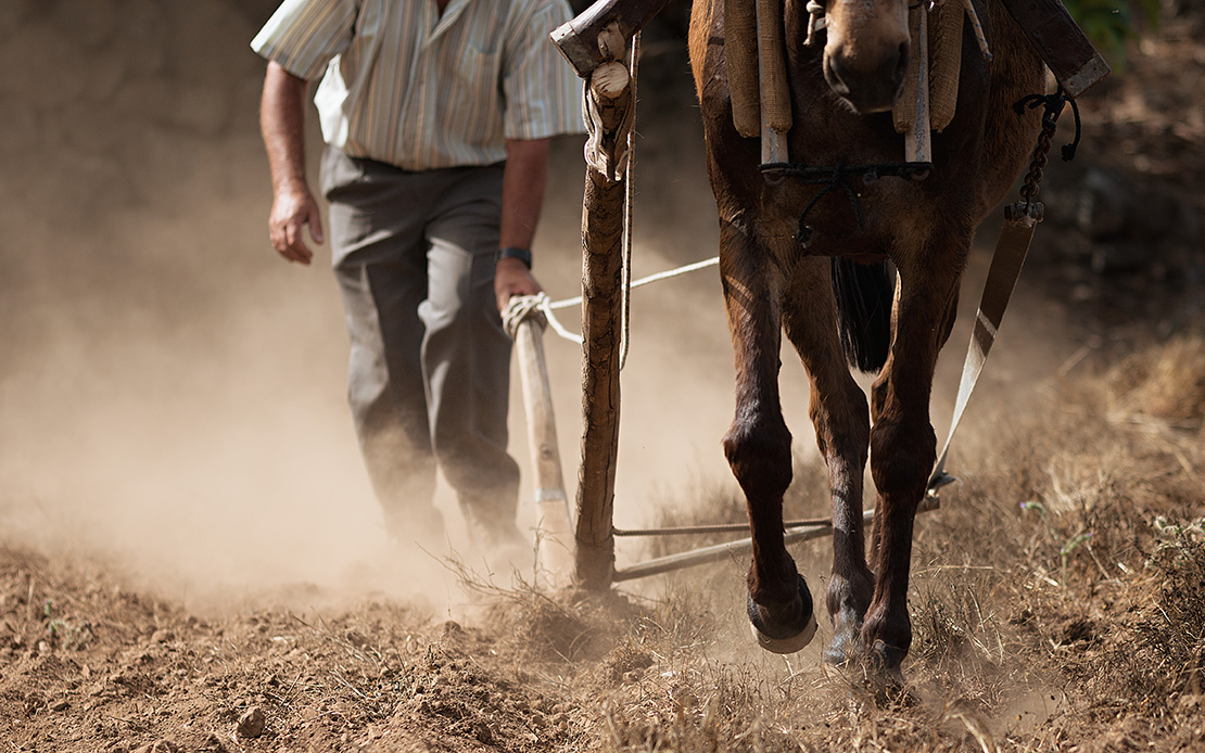 Farmer Plowing
